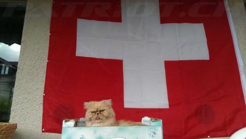 #flaggenstolz #fahne #katze #1august #nationalfeiertag #bundesfeier #fêtenationale #1eraoût #festanazionale #1agosto