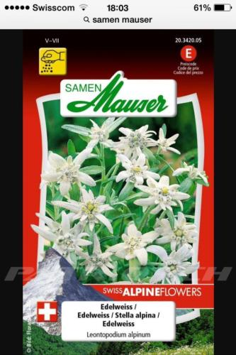 #edelweiss #samen