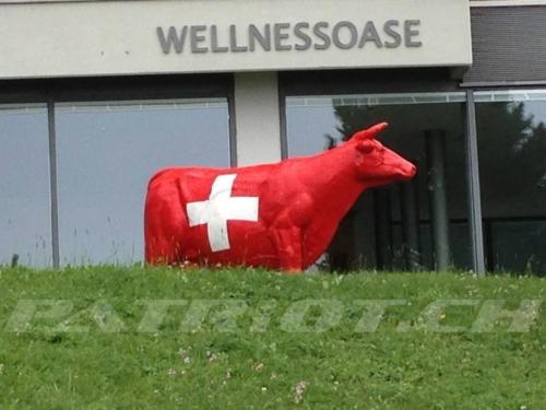#schweizerkreuz #kuh