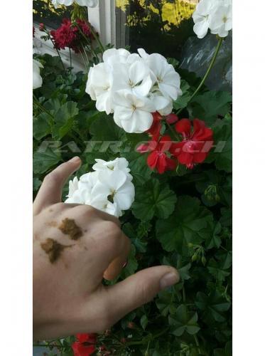 #rotweiss #blume #schnupf #priis !