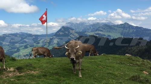 #toggenburg #alp #alpen #kühe #fahne  z'alp im toggenburg dankä ad risn !